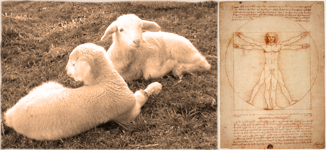 Harmony-and-sheep